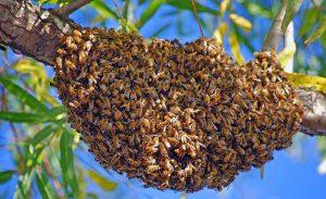 swarm-wide2