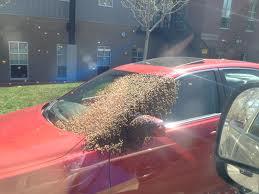 swarm4